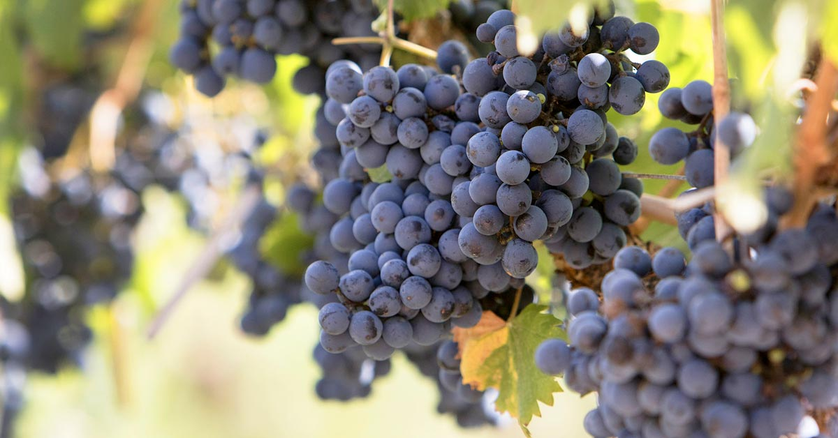 all-about-malbec